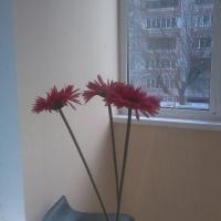 Брянск — 1-комн. квартира, 50 м² – Димитрова (50 м²) — Фото 9