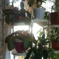 Владивосток — 1-комн. квартира, 18 м² – 100 лет у дом 20 (собственник) (18 м²) — Фото 7