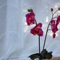 Петрозаводск — 1-комн. квартира, 37 м² – Энгельса, 11 (37 м²) — Фото 4