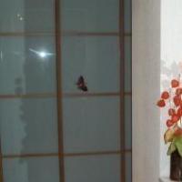 Петрозаводск — 2-комн. квартира, 52 м² – Станционная  дом, 30 (52 м²) — Фото 19